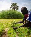 Southern Sudan's agriculture sector presents both potential and great challenges for prospective business people and investors. Photo: Oxfam