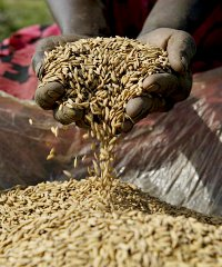 YamBEEji is planning to increase its annual production volumes of rice from 800 tonnes to 1,300 tonnes by the end of 2015.