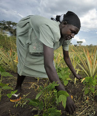 A southern Sudanese women working in the fields of a cooperative farming project.