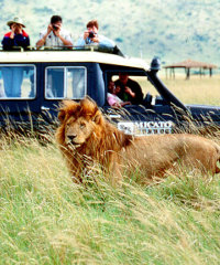 According to Sven Richter, the value of Africa's tourist trade should have the potential to be around US$400 billion.
