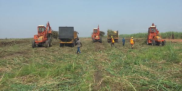 Agriculture - Federal Ministry of Agriculture and Rural Development, Nigeria 600x300
